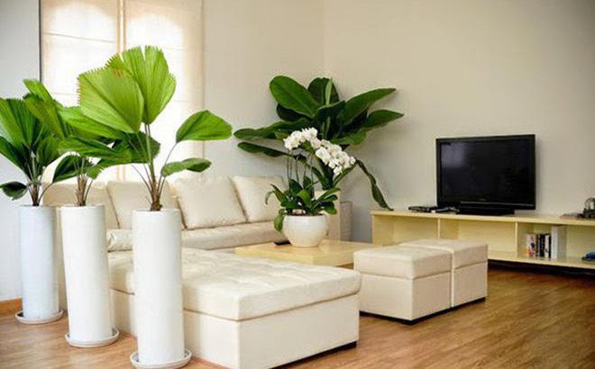 Cách đặt cây xanh trong phòng khách
