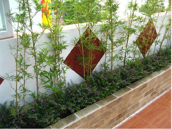 Trồng tre trúc nguyên tắc trồng cây hợp phong thủy nhà