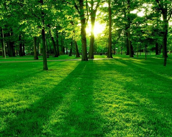 Hình ảnh cây cối bạn đang có mối liên hệ với thiên nhiên
