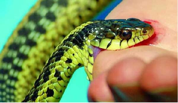 Giải mộng giấc mơ thấy rắn cắn tay, chân là điềm báo gì