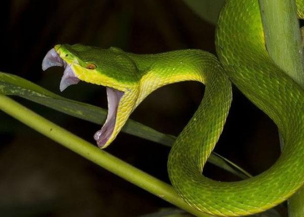 Trong chiêm bao nằm mơ thấy rắn cắn có sao không?