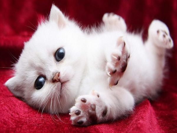 Mơ thấy mèo ẩn hiện điềm báo gì?
