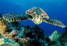 Giải mã chi tiết giấc mơ thấy rùa là điềm báo gì?