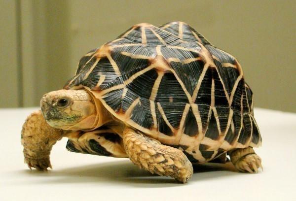 Giải mã chi tiết giấc mơ thấy rùa bò