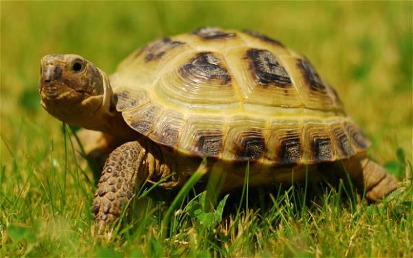 Mơ thấy rùa là điềm báo gì trong tương lai, sự nghiệp