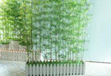 Cây phong thủy trồng trước cửa nhà