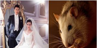 Nam tuổi tý hợp với tuổi nào? nên kết hôn với nữ tuổi gì?