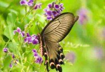 Ý nghĩa giấc mơ thấy bươm bướm và số đề may mắn